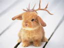 frusturated little jackalope by hyperwittlebunny
