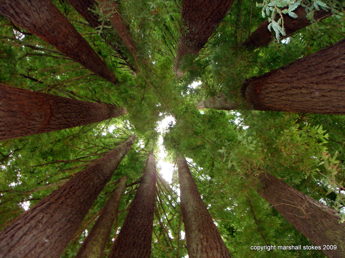 red wood for gorgeous - photo #49
