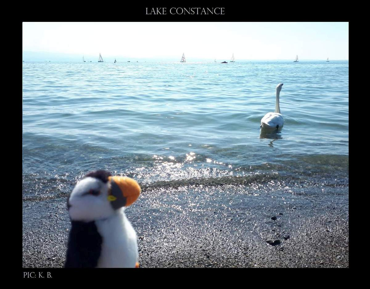 puffin goes on vacation 03